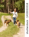 Stock photo dog sitter walks with many dogs on a leash dog walker with different dog breeds in the beautiful 1433033318