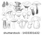 vector mushrooms illustrations... | Shutterstock .eps vector #1433301632