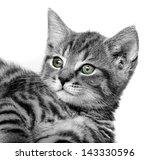 cat portrait | Shutterstock . vector #143330596