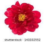 Beautiful Single Flower Head O...