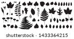 black autumn leaves or foliage... | Shutterstock .eps vector #1433364215