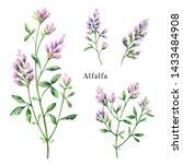 hand drawn watercolor botanical ... | Shutterstock . vector #1433484908