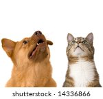 Stock photo dog and cat looking up add your text above 14336866