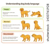 dog body language infographic... | Shutterstock .eps vector #1433761928