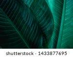 Abstract Dieffenbachia Leaf...