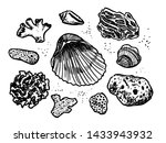 corals and cockleshells hand... | Shutterstock .eps vector #1433943932