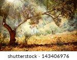 Olive Trees. Mediterranean...