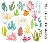 Seaweeds. Aquarium Plants ...