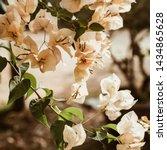 tropical beautiful pale beige... | Shutterstock . vector #1434865628