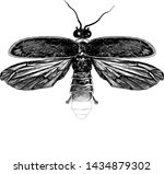 Stock vector firefly with open wings top view symmetrically sketch vector graphic style monochrome illustration 1434879302