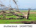 Dry Fallen Tree In Valley