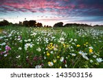 Many Summer Wildflowers On...