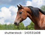 Stock photo portrait of a curious quarter horse mare 143531608