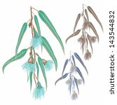 eucalyptus leaves and flowers | Shutterstock .eps vector #143544832