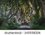 the dak hedges co. antrim ... | Shutterstock . vector #143558206