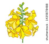 Vector outline Tecoma stans or yellow Trumpet flower bunch and bud in yellow isolated on white background. Ornate contour Tecoma bush for summer decoration. Floral emblem of Bahamas.