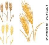 vector illustration of wheat  ... | Shutterstock .eps vector #143596075