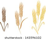wheat barley ears vector... | Shutterstock .eps vector #143596102