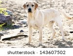Stock photo happy dog play on the ground 143607502