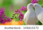 Two Loving White Doves And...