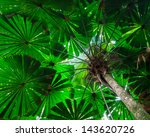 fan palm tree canopy.  green... | Shutterstock . vector #143620726