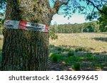Take care  oak processionary...