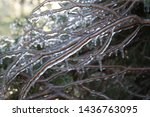 An Unusual Ice Storm Hits...
