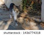 homeless cat walking on the... | Shutterstock . vector #1436774318