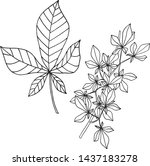 Chestnut Leaves And Branches I...