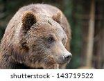 brown bear in forest after rain | Shutterstock . vector #143719522