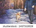 Man With Dog Walking On Snowy...