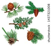 conifer pine tree cone set with ... | Shutterstock .eps vector #1437321008