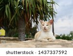portrait of a  cat laying on... | Shutterstock . vector #1437337592