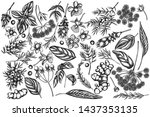 vector set of hand drawn black... | Shutterstock .eps vector #1437353135