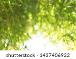 abstract blurred nature... | Shutterstock . vector #1437406922