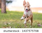 a playful red and white mixed...   Shutterstock . vector #1437575708