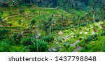 View Of Green Rice Field In...