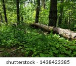 Small photo of Log in the forest at Greenhorn trail, Colorado