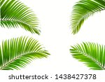 tropical coconut leaf isolated... | Shutterstock . vector #1438427378