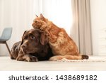 Stock photo cat and dog together on floor indoors fluffy friends 1438689182