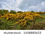 Northern England With Flowering ...