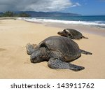 Two Turtles In The Sand In A...