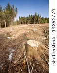 a forest with the trees cut down | Shutterstock . vector #14392774
