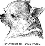 head of a lap dog | Shutterstock .eps vector #143949382