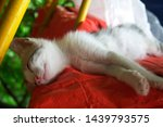 Stock photo sleeping and smiling kitty close up pets and animals sleeping animals cute and beautiful pets 1439793575