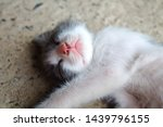 Stock photo sleeping and smiling kitty close up pets and animals sleeping animals cute and beautiful pets 1439796155