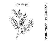 true indigo  indigofera... | Shutterstock .eps vector #1439864528