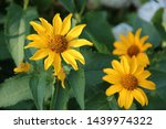 Beautiful Flowers  Yellow...
