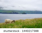Sheep Grazing On The Edge Of...