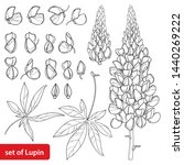 Vector Set With Outline Lupin...